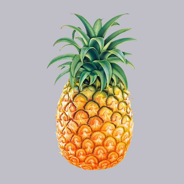 Pineapple Fruit Colorful Tropical Tasty Islands of The Bahamas Caribbean Vector Graphic Image Branding The Bahamian Studio Graphic Design Flyers Logos Printing Marketing Nassau Bahamas
