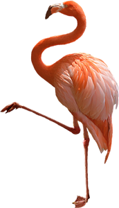 Flamingo Bird Caribbean Paradise Islands of The Bahamas Caribbean Vector Graphic Image Branding The Bahamian Studio Graphic Design Flyers Logos Printing Marketing Nassau Bahamas