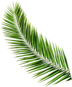 Palm Tree Leaf Paradise Islands of The Bahamas Caribbean Vector Graphic Image Branding The Bahamian Studio Graphic Design Flyers Logos Printing Marketing Nassau Bahamas