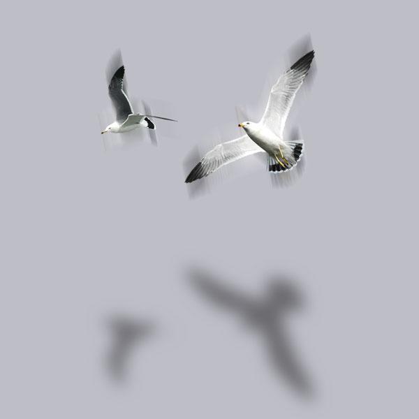 Seagulls Bird Flying Islands of The Bahamas Caribbean Vector Graphic Image Branding The Bahamian Studio Graphic Design Flyers Logos Printing Marketing Nassau Bahamas