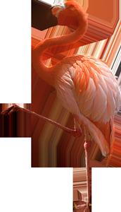 Flamingo Bird Caribbean Paradise Islands of The Bahamas Caribbean Vector Graphic Image Branding The Bahamian Studio Graphic Design Flyers Logos Printing Marketing Nassau Bahamas