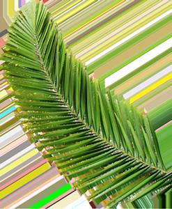 Palm Tree Leaf Paradise Islands of The Bahamas Caribbean Vector Graphic Image Branding The Bahamian Studio Graphic Design Flyers Logos Printing Marketing Nassau Bahamas