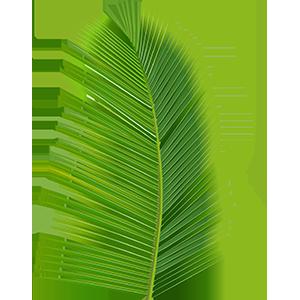 Coconut Tree Leaf Goodmans Bay BeachIslands of The Bahamas Caribbean Vector Graphic Image Branding The Bahamian Studio Graphic Design Flyers Logos Printing Marketing Nassau Bahamas